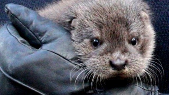 Storms take toll on UK wildlife